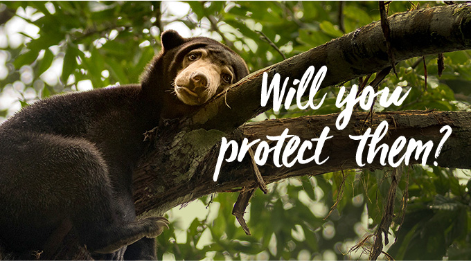 Your gift saves bears around the world.