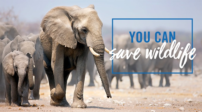You Can Save Wildlife
