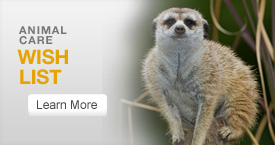 Wish List Meerkat Button Nov. 2011