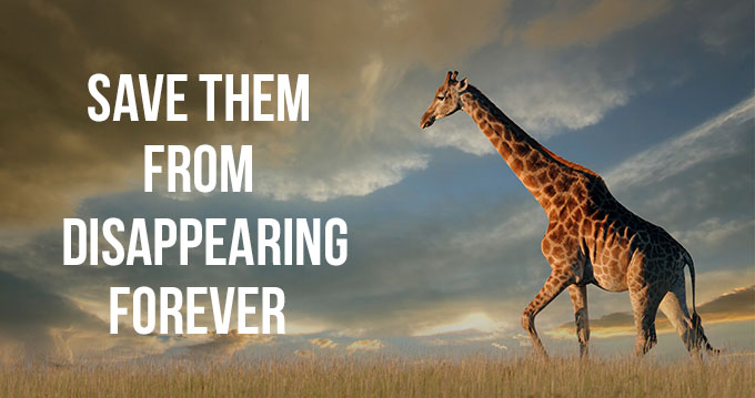 Save Them From Disappearing Forever.
