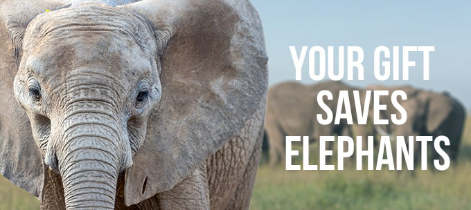 Your gift saves elephants.