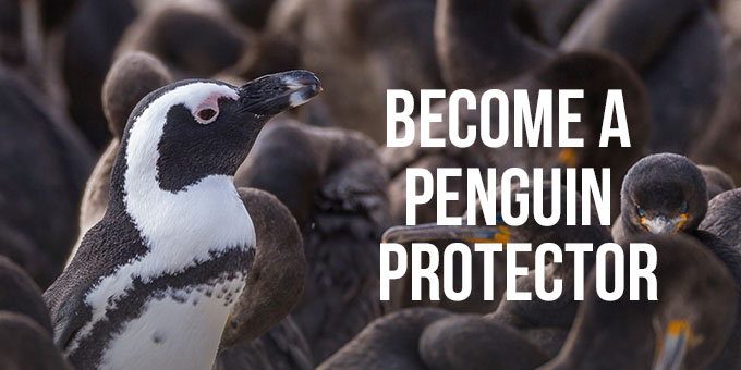 Become a Penguin Protector.