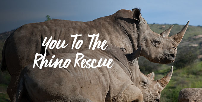 You To The Rhino Rescue