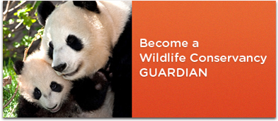 Become a Wildlife Conservancy Guardian
