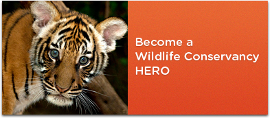 Become a Wildlife Conservancy Hero