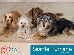 Click here for more information about Seattle Humane 2016 Calendar