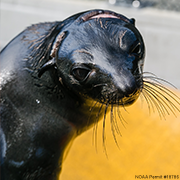 Adopt-a-Seal: 6-Month Subscription