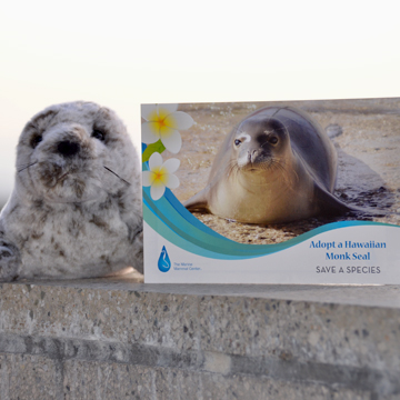 Monk Seal Adoption
