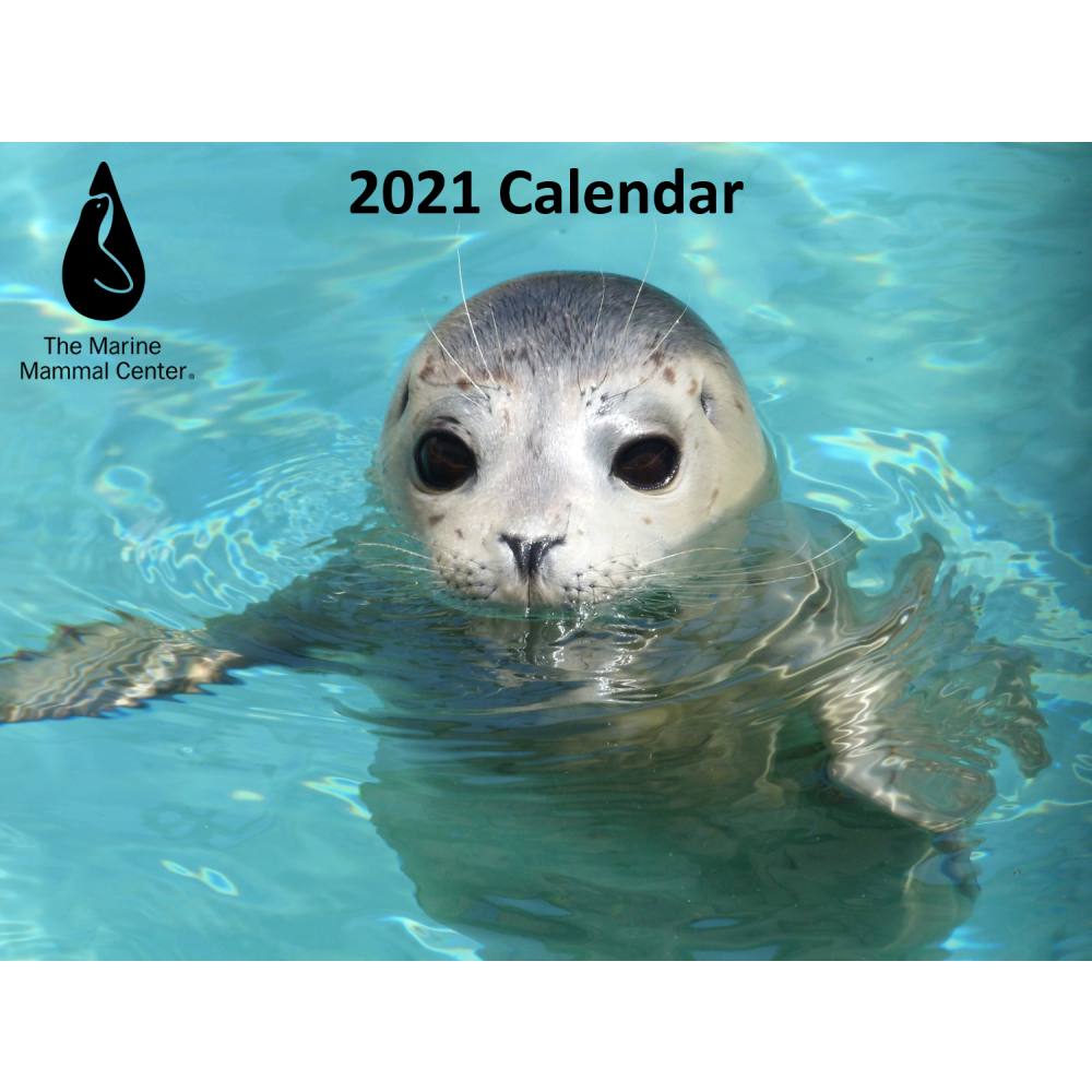 calendar cover image: harbor seal pup in water