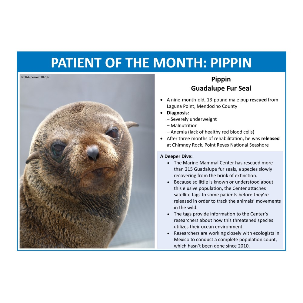 sample calendar page with patient of the month and info on fur seals