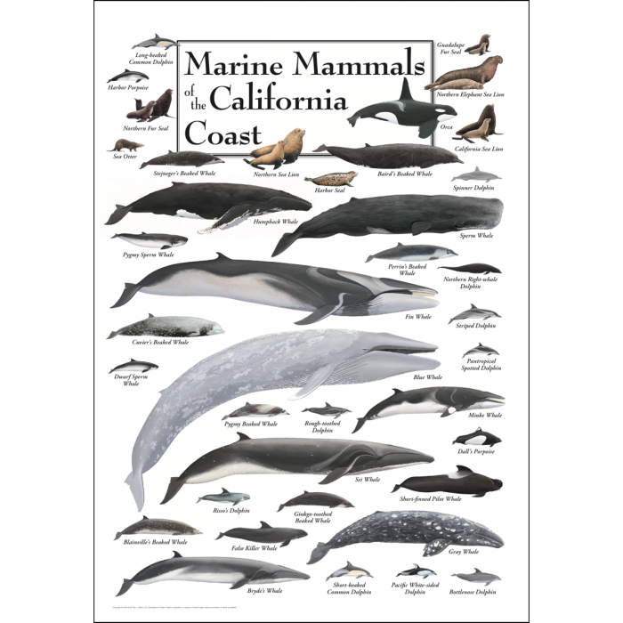 poster featuring 38 marine mammal species