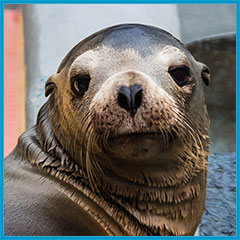 California sea lion Dangela, Patient of the Year