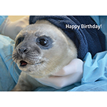 Click here for more information about Harbor Seal Birthday Card