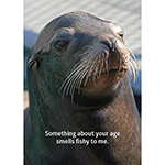 Click here for more information about Sea Lion Birthday Card