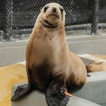 Click here for more information about Adopt-a-Seal® - Seadog
