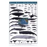 Click here for more information about North Pacific Marine Mammal Poster