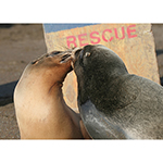 Click here for more information about Friendship Card (Sea Lions)