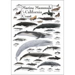 Click here for more information about Marine Mammals of the California Coast Poster