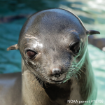 Adopt-a-Seal® Neshema Exclusive Digital Download!
