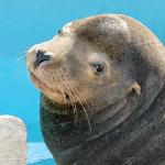 Click here for more information about Adopt-A-Seal® - Chippy