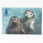Harbor Seals Magnet