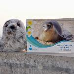 Click here for more information about Adopt-A-Seal - KP2