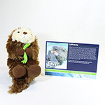 Click here for more information about Adopt-a-Seal® - Calloway Adoption Package, with Plush