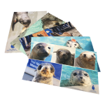 Click here for more information about Postcards - Assorted Set of 5 with Stamps
