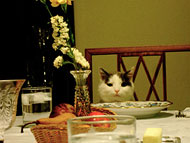 A cat sitting in a chair at a dinner table