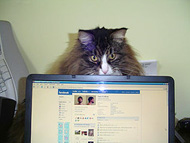 A cat shows off its facebook profile on a laptop screen