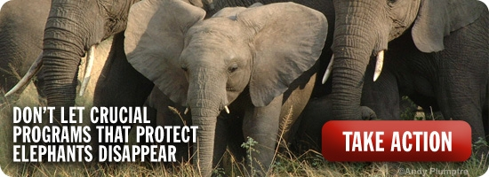 Don't let crucial programs that protect elephants disappear.