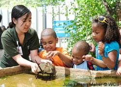 Educator at the NY Aquarium