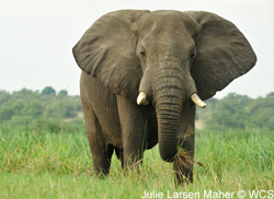 Help shut down the ivory trade worldwide