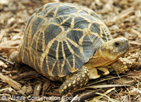Save turtles and tortoises