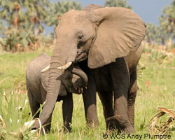 Save elephants and other endangered wildlife