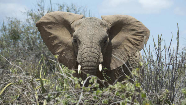 A plan to save elephants