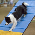 Agility for Fun I